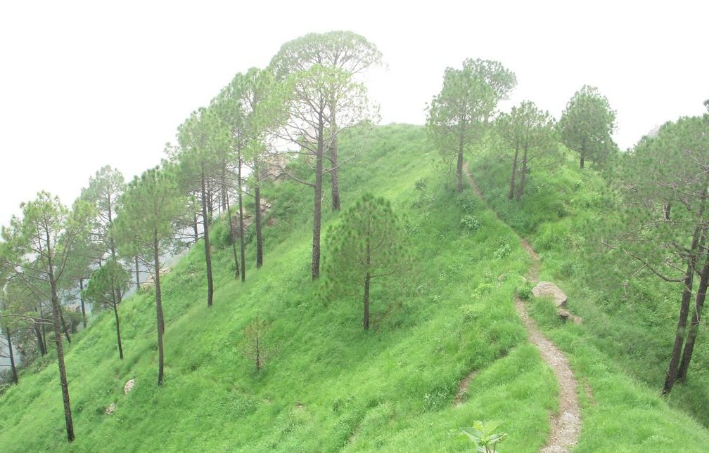 Places to visit in kasauli gilbert trail