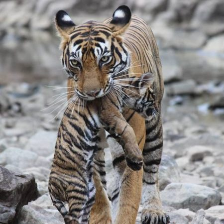 mukundara tiger reserve