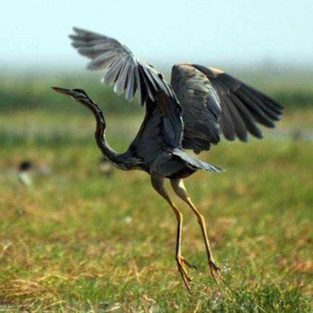 Ramgarh vishdhari wildlife sanctuary