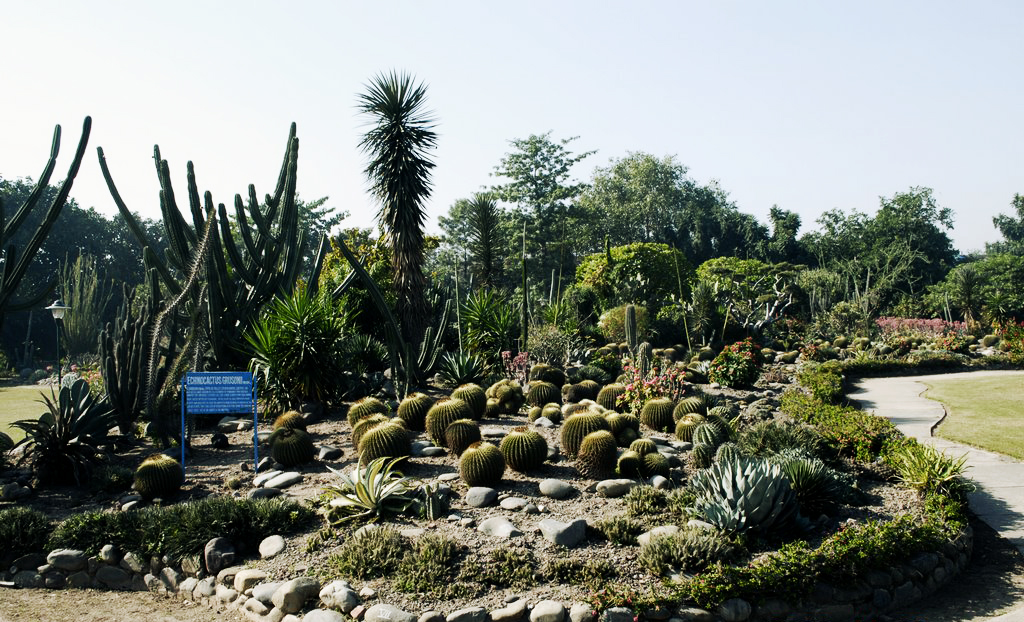 cactus garden in chandigarh